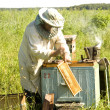 Stock Photo: The beekeeper works
