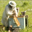 Work of the beekeeper - Stock Photo