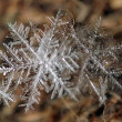 Snowflakes — Stock Photo #2730044
