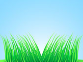 Wisps of lush grass. — Stock Vector