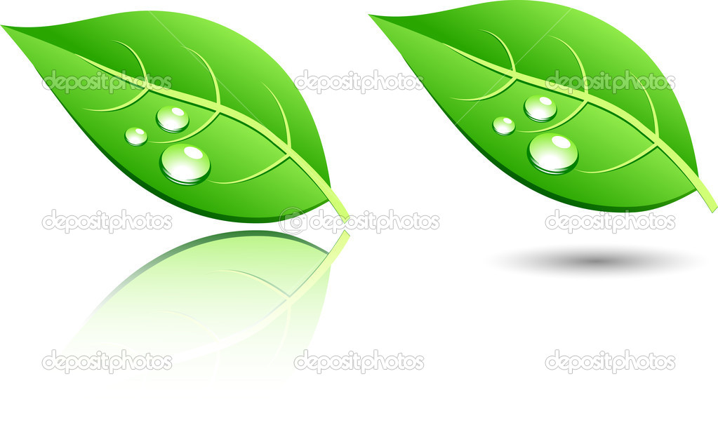 Green leaf icons. Vector illustration.  — Stock Vector #2867249