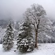 Winterlandschaft - Lizenzfreies Foto