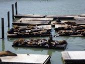 Seals Hangout At Pier 39 — Stock Photo