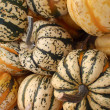 Close up of small pumkins — Stock Photo