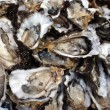 Oysters, half shells, close-up — Stock Photo