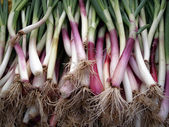 Long Big Organic Green Onions — Stock Photo