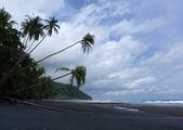 Coconut trees at the beach — Stock Photo
