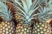 Farmers Market Pineapples — Stock Photo