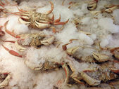Seafood Market: Frozen Collection of Crabs — Stock Photo