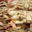 close up of the underside of san francisco dungeness crabs — Stock Photo