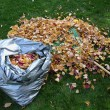 Stock Photo: Autumn - Bag of Leaves