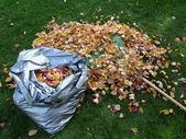 Autumn - Bag of Leaves — Stock Photo