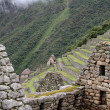 Ancient ruins of Machu Picchu — Stock Photo