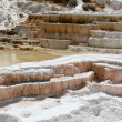 Постер, плакат: Geyser at Mammoth Hot Springs