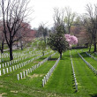 Stock Photo: Arlington National Cemetery, Virginia