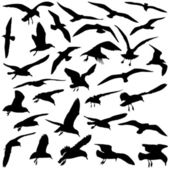 Birds — Vector de stock
