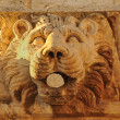 Stock Photo: Stone lion head