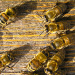Young bees at work — Foto Stock
