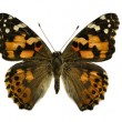 Stock Photo: Three butterflies