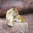 Stock Photo: Lioness on rock
