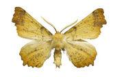 Papillon jaune — Photo