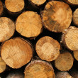 Wood log pile background — Stock Photo #2760416