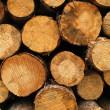 Wood log pile background — Stock Photo