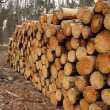 Wood log pile background — Stock Photo