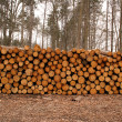Stock Photo: Wood log pile background