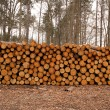 Wood log pile background — Stockfoto