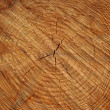 Stock Photo: Close-up wooden cut texture