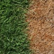 Brown and Green Grass — Stock Photo #3429190