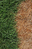 Brown and Green Grass — Stock Photo