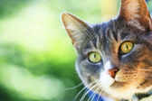 Cat's Face — Stockfoto