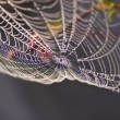 Stock Photo: Dew on Spiderweb
