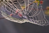 Dew on Spiderweb — Stock Photo