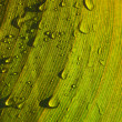 Moist leaf — Stock Photo #3747981