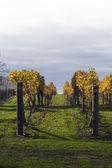 Höstens vinstockar 06 — Stockfoto