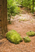 Redwood Forest 05 — Stock Photo