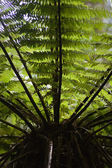 Tree Fern 02 — Stock Photo