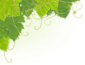 Grape leaf corner — Stock Photo