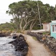 High Tide on Rangitoto Island - Stock Photo