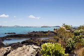 Auckland from Rangitoto Island — Foto Stock