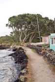High Tide on Rangitoto Island — Stock Photo