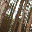 Stock Photo: Tree forest