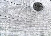 Baumstruktur hautnah — Stockfoto