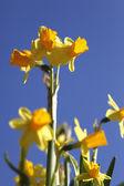 Frühlingserwachen — Stock Photo