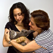 Ladies holding cat — Stock Photo