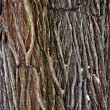 Tree bark detail — Stock Photo