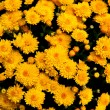 Collection of yellow orange flowers — Stock Photo